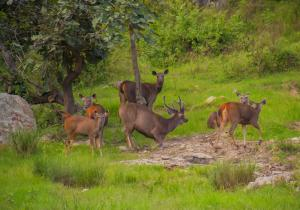 Animals taking rest in forest - Bandipur National Park
