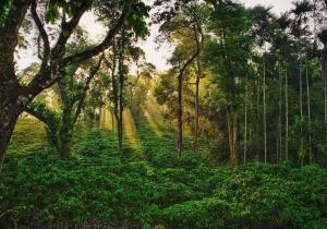 Morning View - Coorg