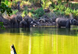 Elephants Near Lake - K Gudi (BR Hills)