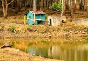 Jungle Hut - K Gudi (BR Hills)