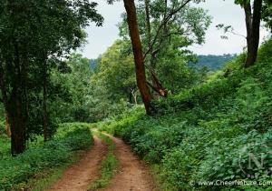 View of Jungle Road - K Gudi (BR Hills)