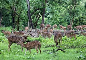 Deers in forest - Mudumalai National Park