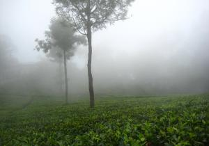 Winter Season - Ooty